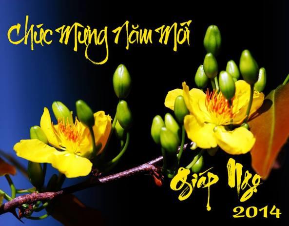 Cành mai vàng đặc trưng cho cái Tết miền Nam. (Foto: Phong Phạm)